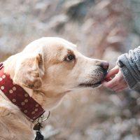 «Давай заведем собаку»: 8 полезных фактов для детей и родителей