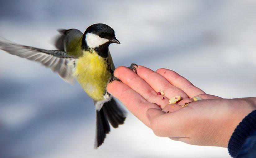 Синичкины обеды: помогаем птицам зимовать в городе